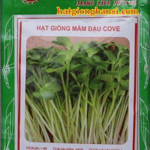 Hạt giống rau mầm đậu cove