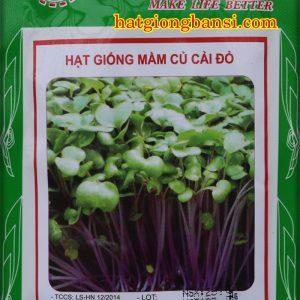 Hạt giống rau mầm củ cải đỏ