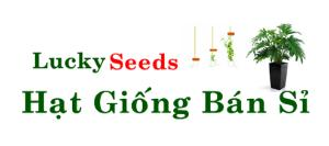 Lucky Seeds