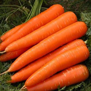 Cà rốt newton