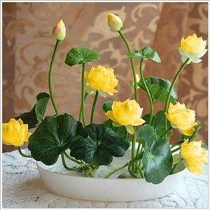 Hoa sen bát