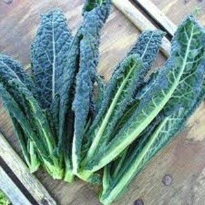 Rau cải xanh kale